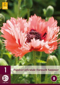 Papaver Forncett Summer