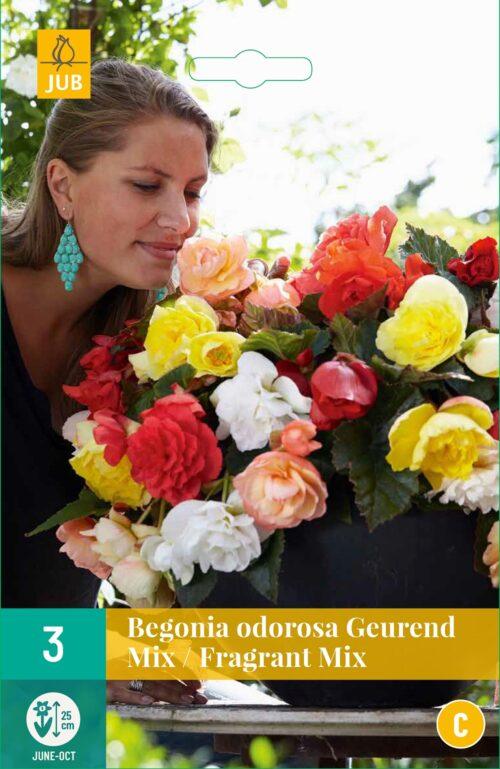 Begonia Cascade Odorosa Fragrant Mix