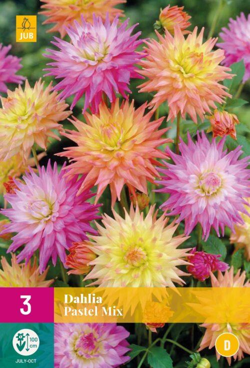 Dahlia Pastel Mix
