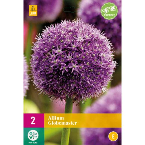 Allium Globemaster 2st.