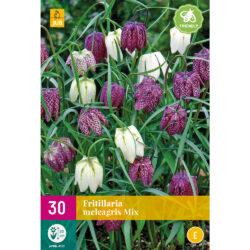 Fritillaria Meleagris Mix 30st.