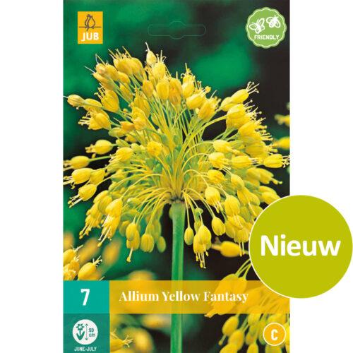 Allium Yellow Fantasy 7st