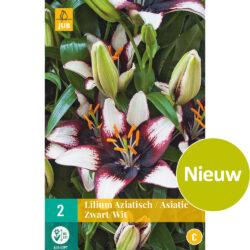 Lilium Asiatic Black & White 2st.