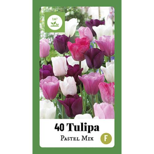 Tulpen Pastel Mix 40st.