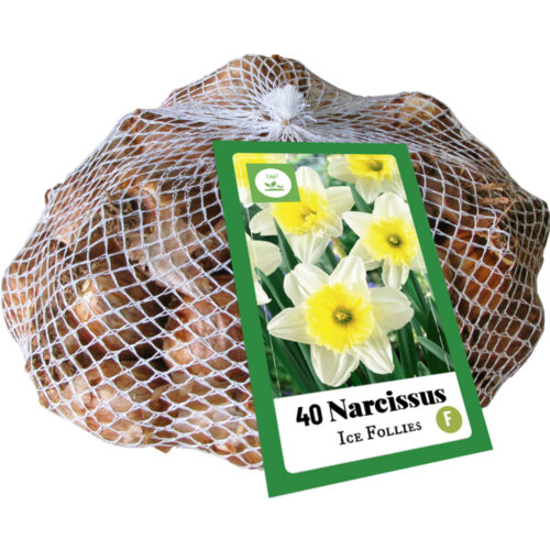 Narcissus Ice Follies 40st.