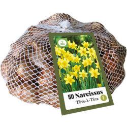 Narcissus Tête-à-Tête 50st.