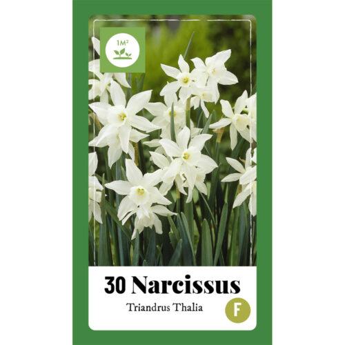 Narcissus Triandrus Thalia 30st.