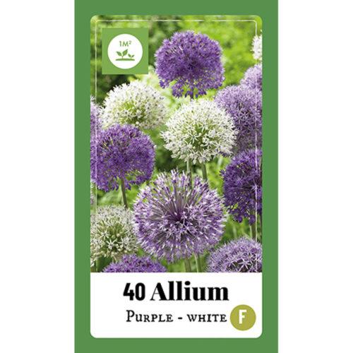 Allium Purple - White mix 40st.
