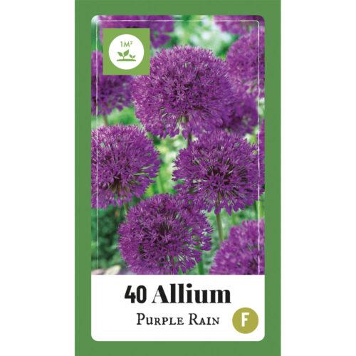 Allium Purple Rain 40st.