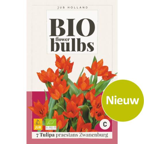 Bio Tulpen Praestans Zwanenburg 7st.