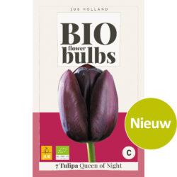 Bio Tulpen Queen of Night 7st.
