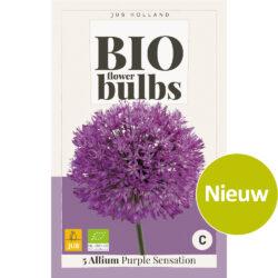 Bio Allium Purple Sensation 5st.