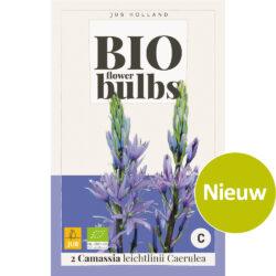 Bio Camassia Leichtlinii Caerulea 2st.
