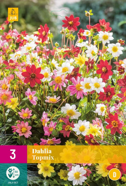 Dahlia Topmix