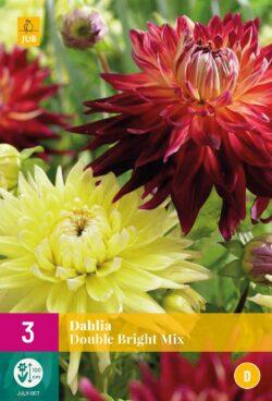 Dahlia Double Bright Mix