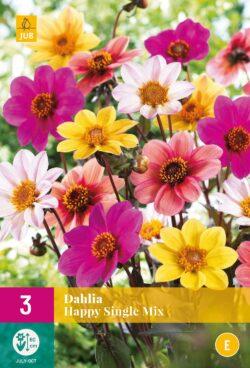 Dahlia Happy Single Mix