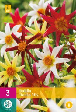 Dahlia Honka Mix