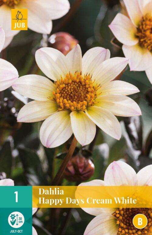 Dahlia Happy Days Cream White