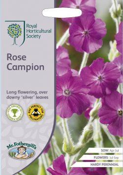 Prikneus Rose Campion RHS Zaden