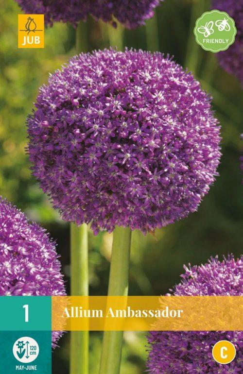 Bloembollen Allium Ambassador
