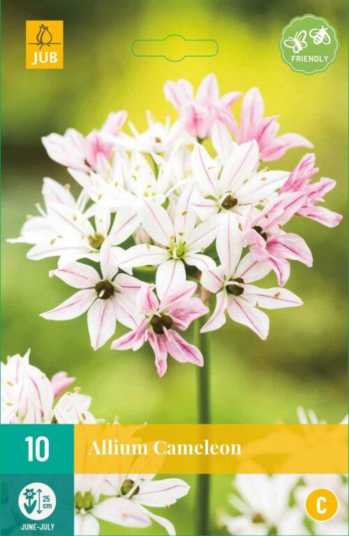 Allium Cameleon 10st