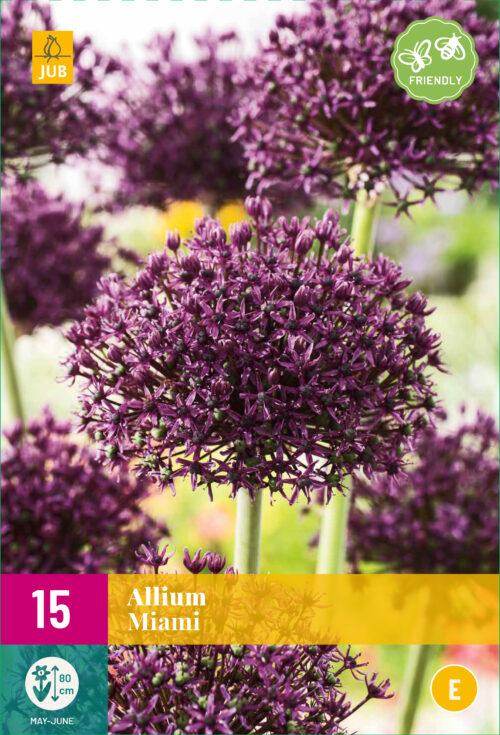 Allium Miami 15st