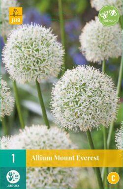 Bloembollen Allium Mount Everest