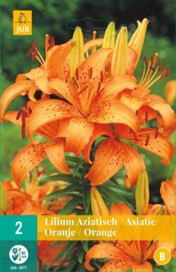 Lillium Asiatic Orange