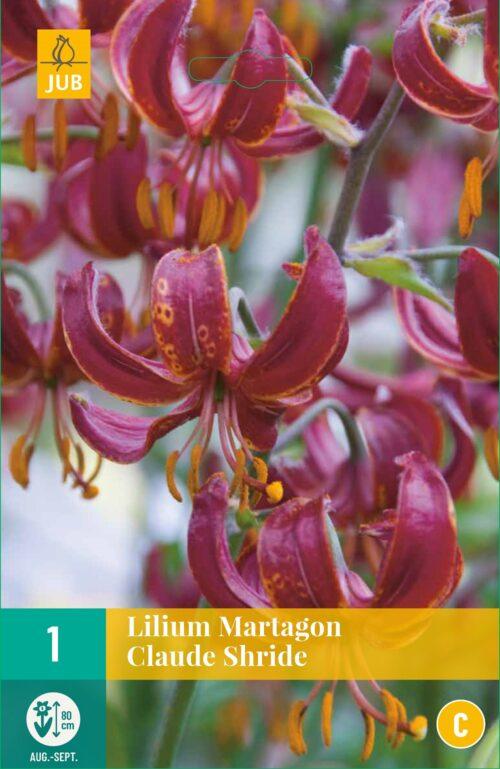 Lilium Martagon Claude Shride