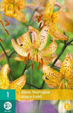 Lilium Martagon Guinea Gold