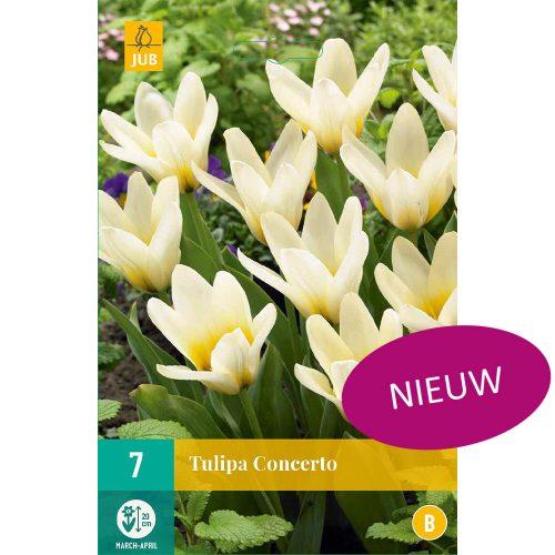 Bloembollen Tulpen Concerto