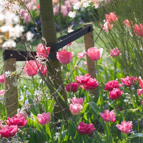 Bloembollen Tulpen Design Impression