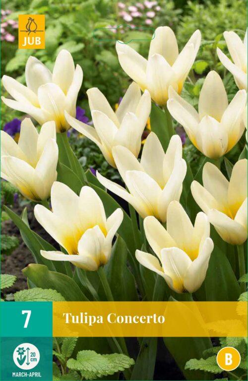 Tulpen Concerto