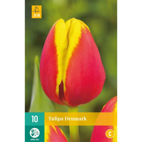 Bloembollen rood met gele Tulpen Denmark