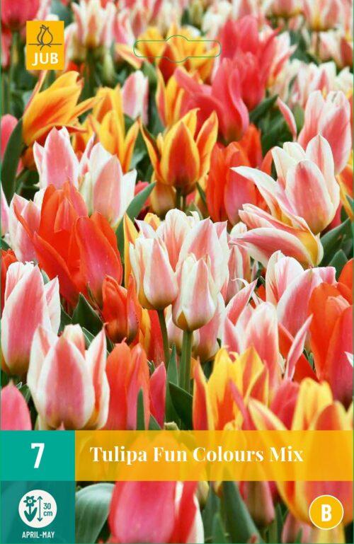 Tulpen Fun Colours