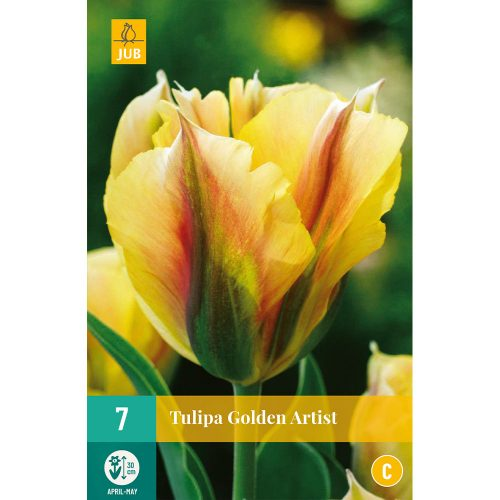 Bloembollen Tulpen Golden Artist
