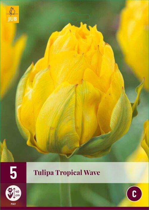 Tulpen Tropical Wave