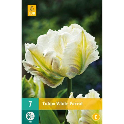 Bloembollen Tulpen White Parrot