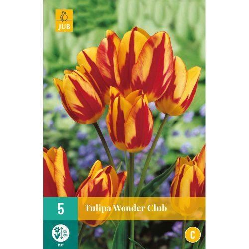 Bloembollen Tulpen Wonder Club