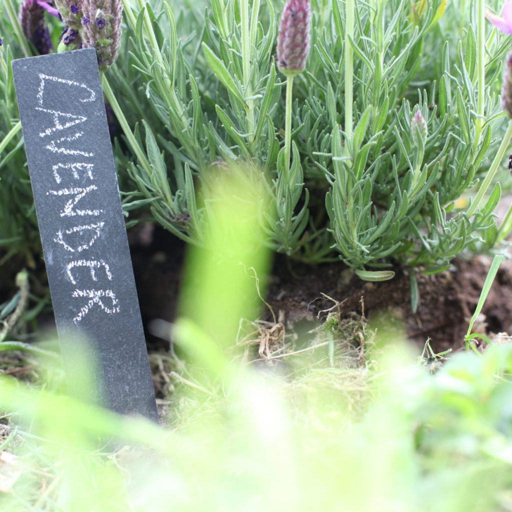 leisteen plantenlabels