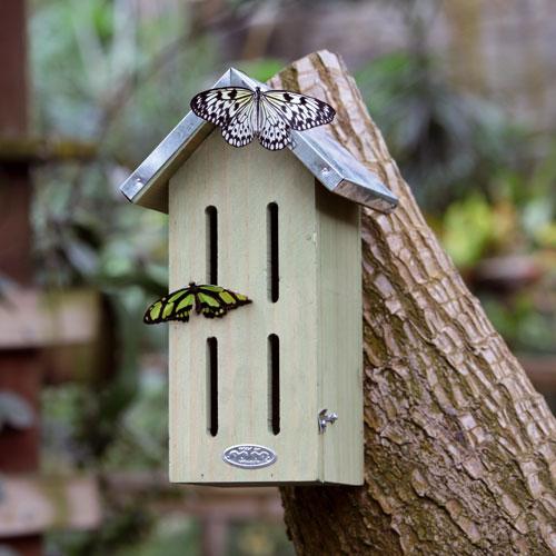 Vlinderkast