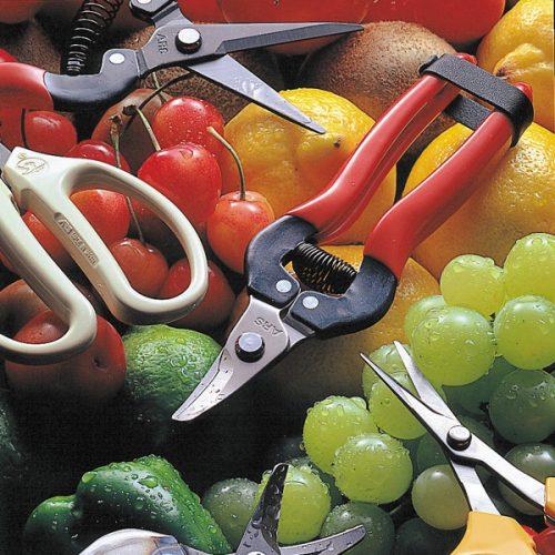 Fruitschaar