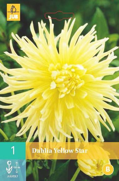 Dahlia Yellow Star 1st.