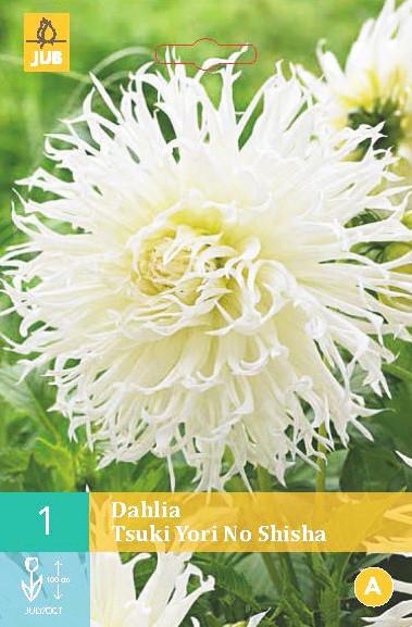 Dahlia Tsuki Yori No Shisha 1st.