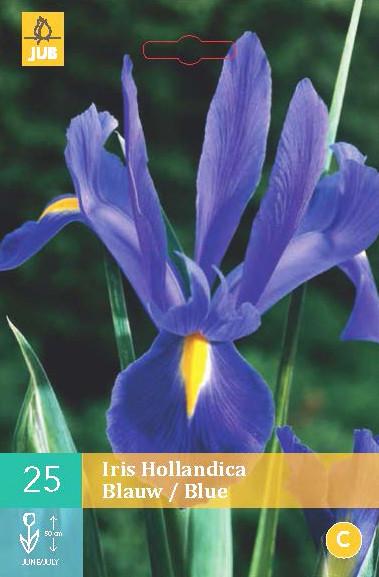 Iris Hollandica Blauw 25st.
