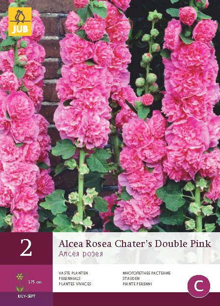 Alcea Rosea Chater's Double Pink 2st.