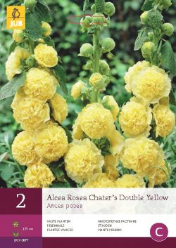 Alcea Rosea Chater's Double Yellow 2st.