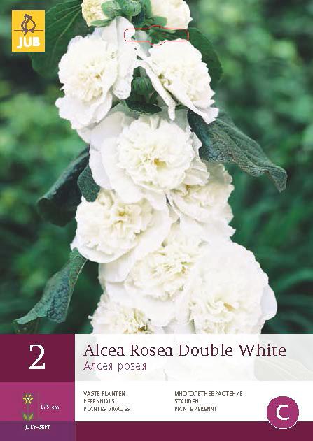 Alcea Rosea Double White 2st.