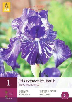 Iris Germanica Batik 1st.