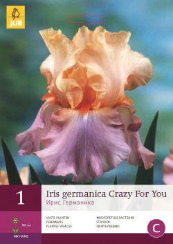 Iris Germanica Crazy For You 1st.
